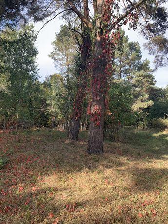 Учясток в лесу Глеваха
