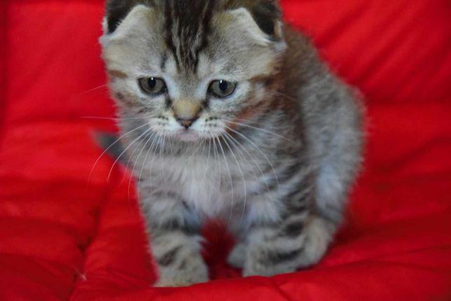 Маленький тигренок - котенок.