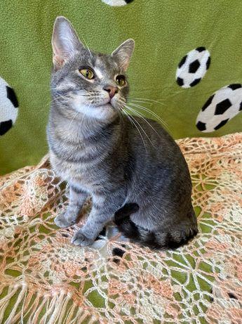 Отдам серого котенка ,мальчик ,9 месяцев ,кастрирован