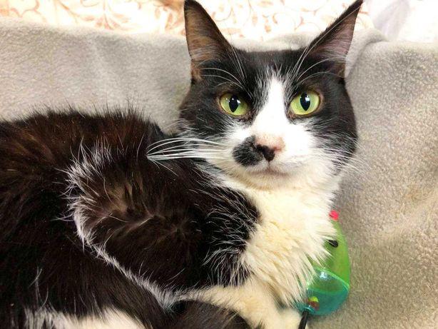 Гарненька чорно-біла кицюня Елка 1 рік шукає сім'ю! кішка кіт кошеня