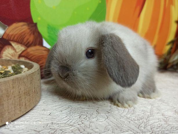 Питомник карликовых кроликов BAMBY Кривой Рог