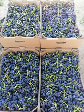Саженцы винограда хороших сортов