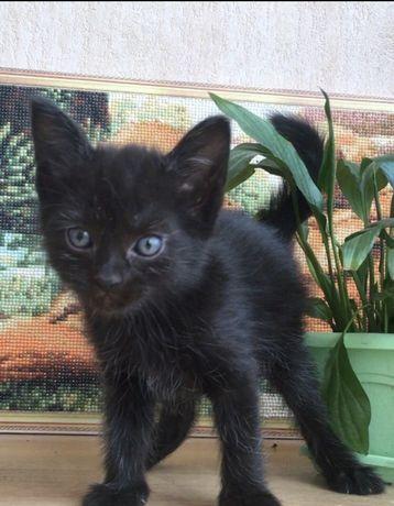 Маленький, черный ласковый котенок