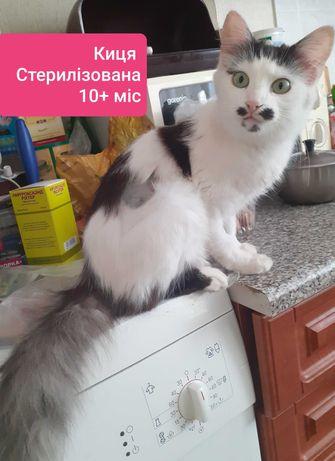 Киця Стерилізована шукає господарів!