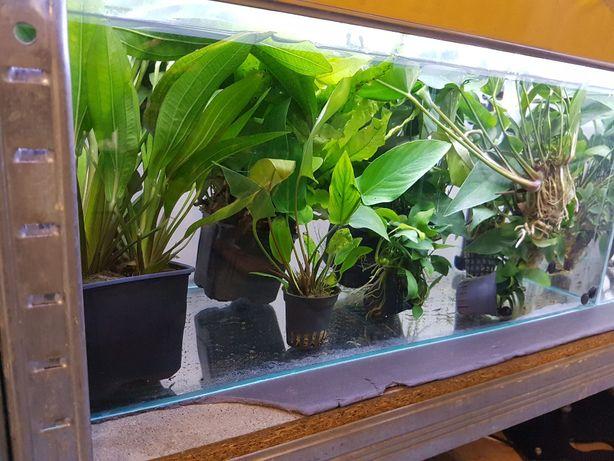 Piękne rośliny akwariowe różnych gatunków