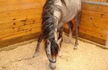 Ściółka, pellet ze słomy dla koni, drobiu. Dostawa w cenie