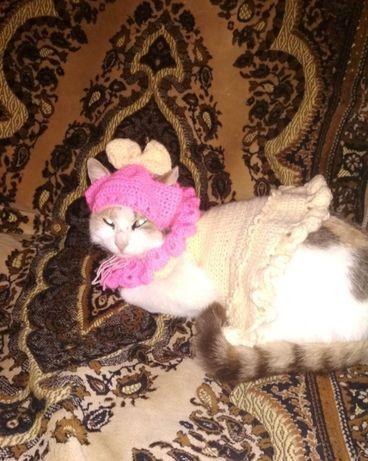 Одежда для кошки. Авторская работа
