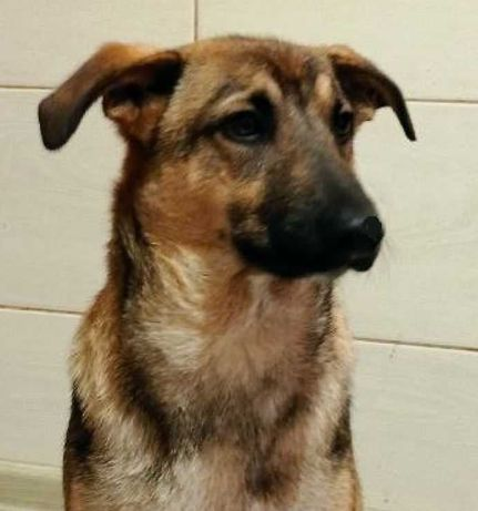 Найден пес в Киевском р-не Харькова