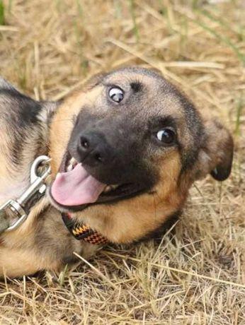 Спасти Сонечку.. некрупная, ласковая, собака, щенок, 7 мес