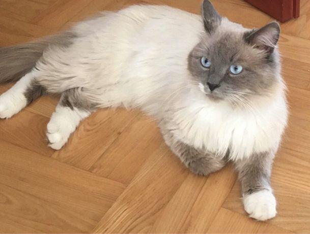 Zaginął kot Olsztyn brzeziny