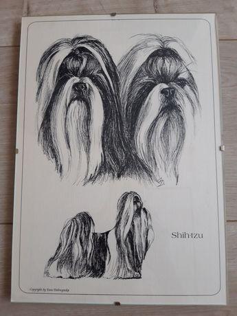 Szkic rysunek w antyramie shih tzu