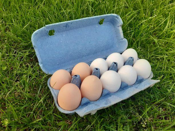 Sprzedam jajka swojskie kurze