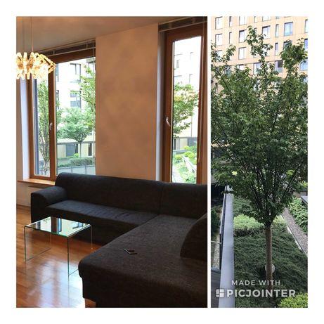 Piękny Apartament, Śródmieście 2 pokoje od zaraz, bez prowizji