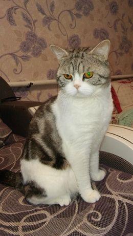 Кот Том мрамор на серебре