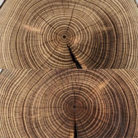 Plastry drewna! 12 gatunków