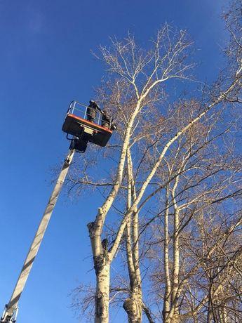 Спил и обрезка деревьев от 500 грн! Звоните!