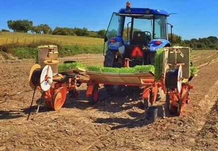 Plantador Checchi magli
