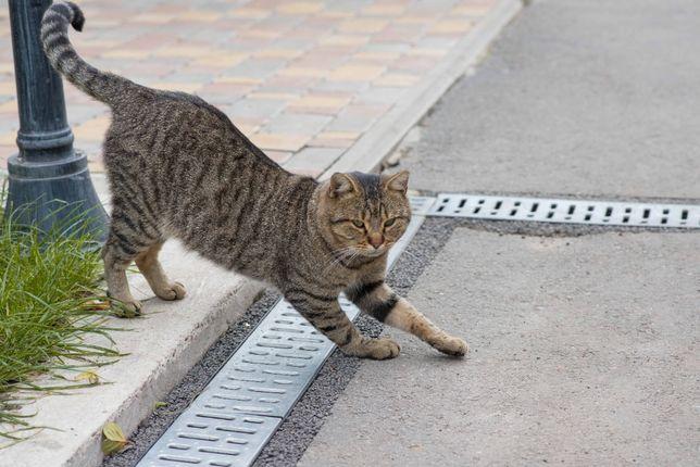 Неимоверный кот с зелеными глазами Миша Потапов ищет дом