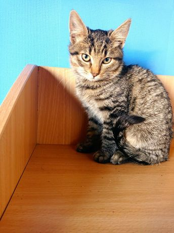 Чудесный полосатый котёнок