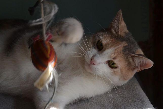 Кошка (Лара )1,5 года ,красивая ,добрая ,в поиске лучших зозяев