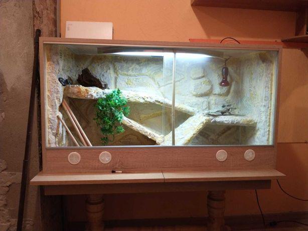 Terrarium dla jaszczurki