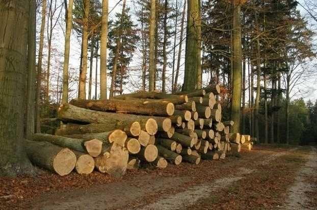 Продаю дрова твердых пород дуб граб акация и другие.