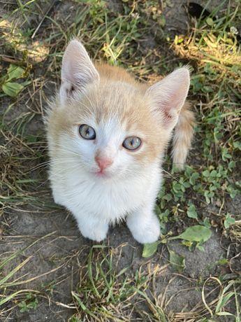 Отдам милого красивого котенка