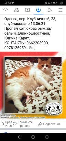 Помогите найти кота