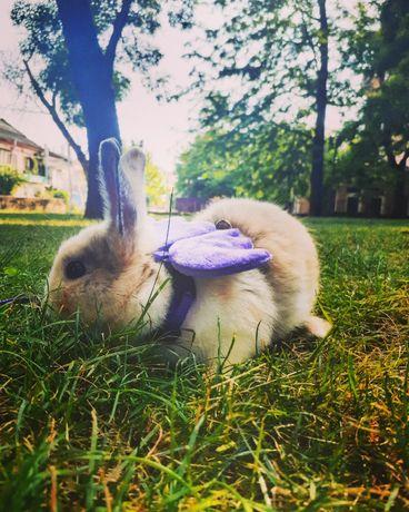 Продам декоративного кролика мраморного окраса