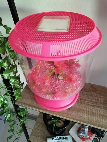 Aquario Rosa Novo