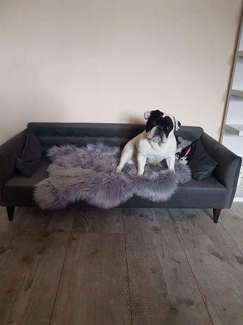Stylowa sofa dla każdego psa!