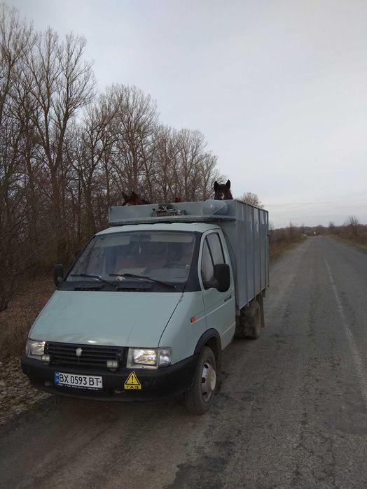 Перевезення ВРХ по Україні Летичев - изображение 1
