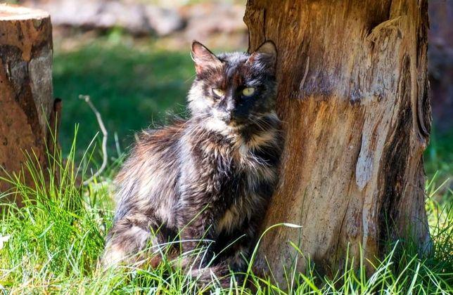 Kocia rodzinka PILNIE szuka domów !!!