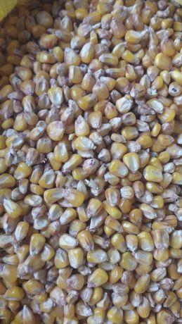 Pasza karma dla kur gołębi królików pszenica kukurydza mieszanka