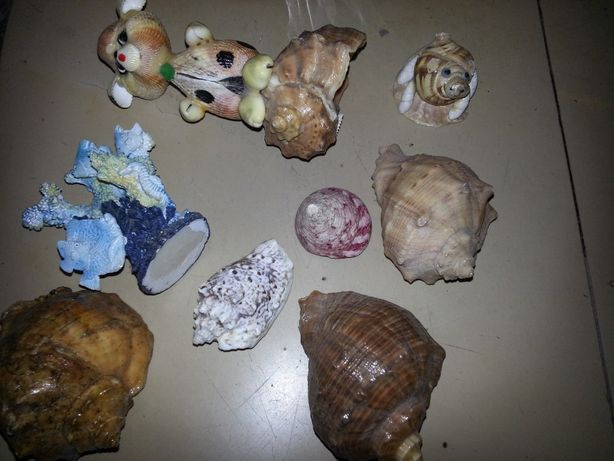 ракушки для аквариума, фигурки из ракушек