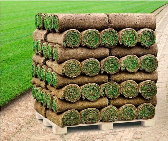 Trawa z rolki/trawnik/trawa rolowana PRODUCENT