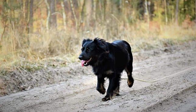 Młody piękny bezproblemowy psiak szuka kochającego domku na zawsze