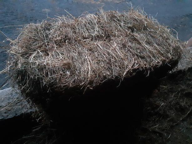 Siano w kostkach 75-85 cm