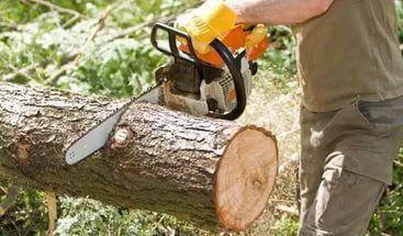 Спил деревьев,распил на дрова, обрезка сада.ВЫВОЗ!