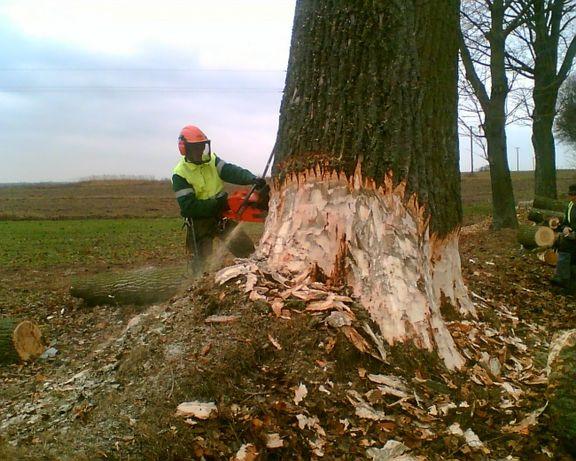 Wycinka trudnych drzew alpinistycznie,pielegnacja,czyszczenie działek.