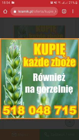 Zboże paszowe owies żyto pszenżyto jęczmień mieszanka pszenica