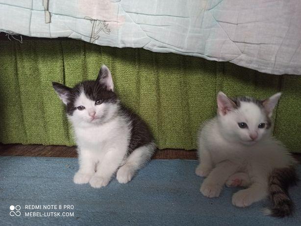 Котик кошеня кіт (віддам даром) від доброї кішки