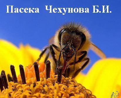 Мед цветочный лесостепной из семейной пасеки - 70 грн/кг, 105 грн/1л