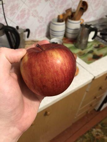 Продам яблука фуджі