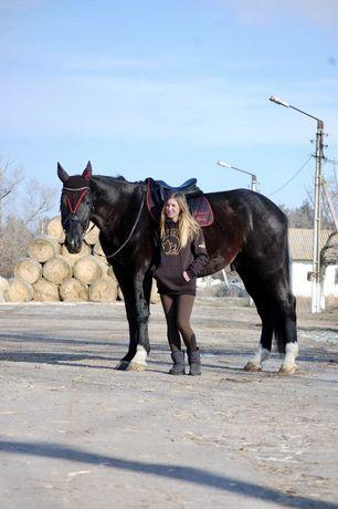 Высокий мерин, конь, лошадь