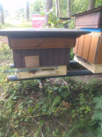 Sprzedam pszczoły z ulem