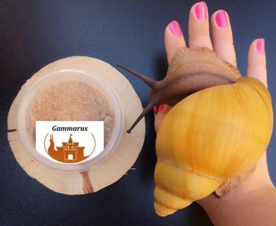 Gammarus mielony Ślimaki Achatina i Archachatina