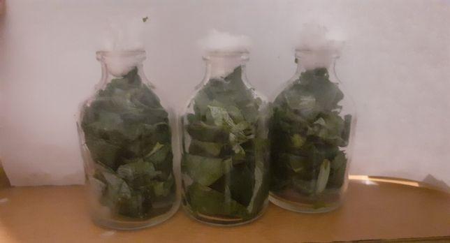 Perfumador natural de folhas de eucalipto