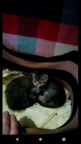 Кішечка Ненсі шукає господарів