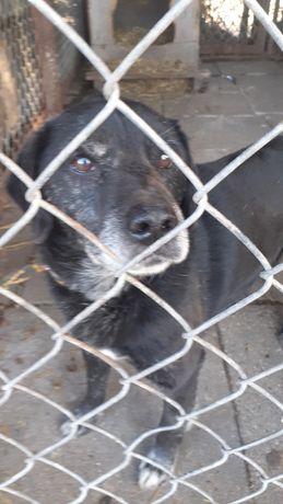Przyjazny Siwy szuka domu. Pies do adopcji